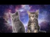 Няшные котята