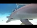 Игры - Дельфины и люди ...