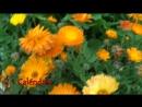 10 Flores Imprescindibles Para Poner En El Huerto o Jardin __ La Huertina De Toni