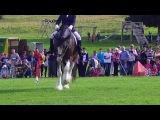 Dressage to music at North Wales Shire Open Day