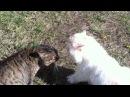 Кот Боня ругается матом жара