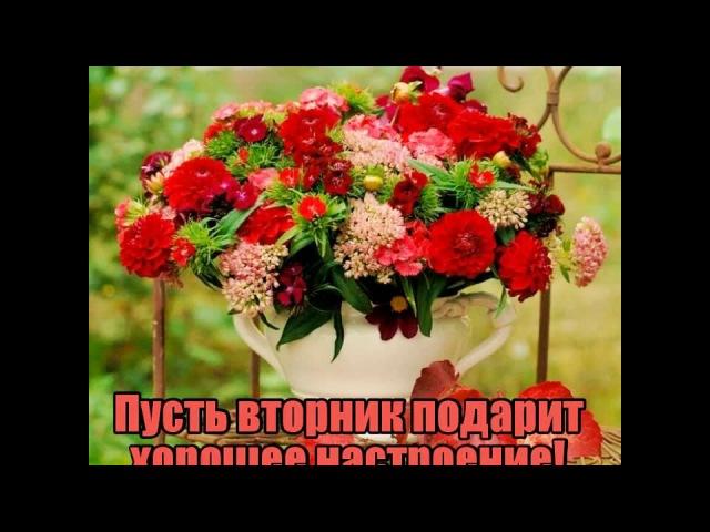 Доброго вторника @