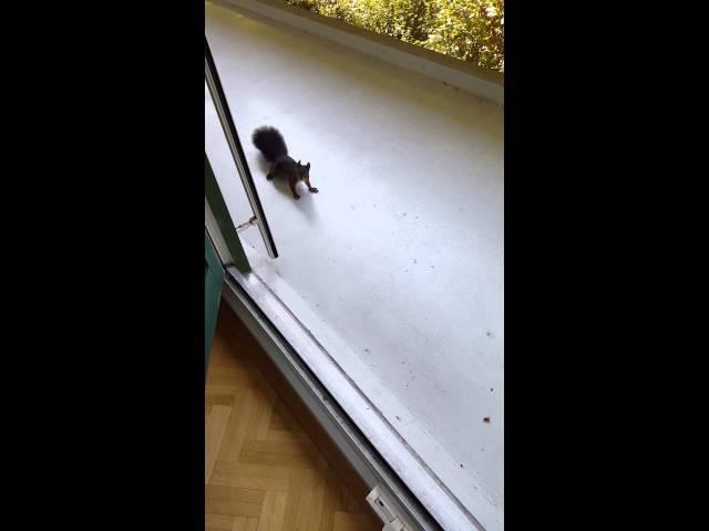 Маленьке звірятко - 1