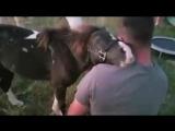 Обнимашки с лошадкой