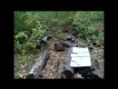 Прогулка по лесу с МД. Эхо войны