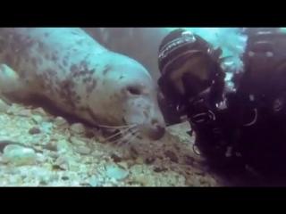 Морской котик ластится