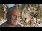 Александр Пашанов Старый волк