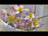 Нежный поцелуй весны Первоцветы Гитара Релакс
