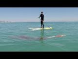 Giant Squid Encounter - Full Version