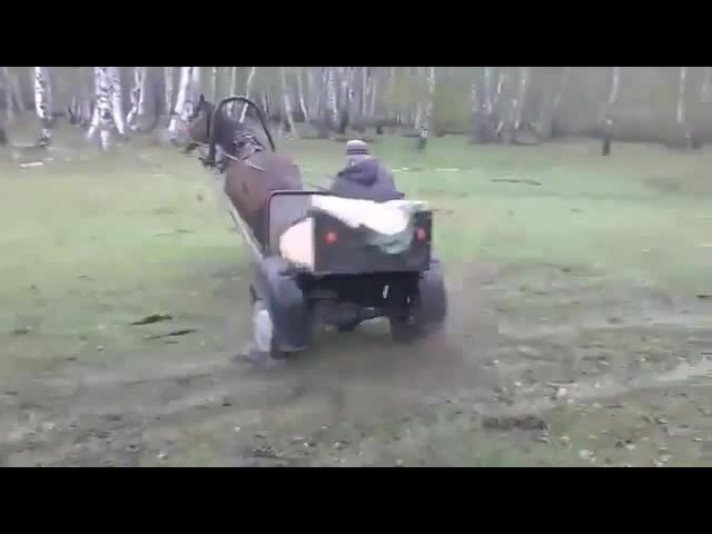 Tokyo Drift на лошади