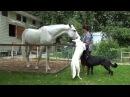 Наши лошади и собаки - между белым и черным