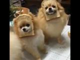 Сломанные собаки