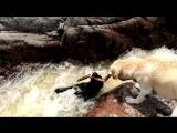 «Держись за палку!» Собака тонет в бушующей воде, но его друг приходит на помощь!