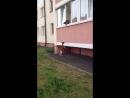 Собака VS Кошка