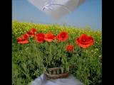 Цветы для любимых. Радмила Караклаич.wmv
