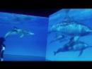 День Дельфина. Выставка.