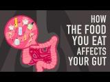 Как пища, которую мы едим, влияет на наш кишечник и употребление каких продуктов нам необходимо.