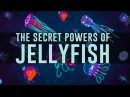 Jellyfish predate dinosaurs How have they survived so long David Gruber