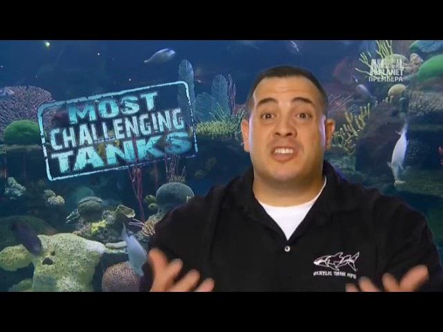 Бонус Аквариумный бизнес Самые сложные аквариумы