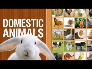 Домашние животные на английском языке | Для детей и начинающих