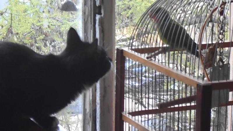 кошка и птичка