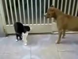 Кот ДЖЕДАЙ против собак!!! Смотреть...