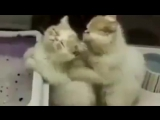 Кошачии ласки=)