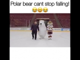Polar bear cant stop falling)))
