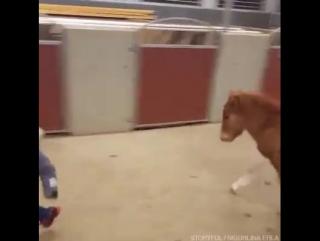 Просто мальчик и его пони. Ребенок и жеребенок. Друзья не разлей вода.
