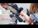 Светлана Бурлак: Птицам есть о чем поспорить с человеком