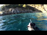 Подводная охота. Греция, Халкидики. Ψαροντούφεκο στα ρηχά, Χαλκιδική.