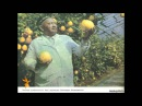 Uzbek Отамдан қолган лимонзорни сақлаб қололмадим