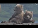 медведица с необычным окрасом