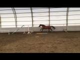 Нелли прыжки в шпрингарте