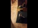 Кот играет с хвостом кошки