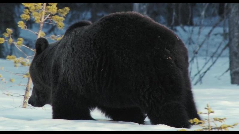 Russland. Im Reich der Tiger, Baeren und Vulkane / Россия. В царстве тигров, медведей и вулканов (2010 г.)