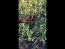 Дачник. Борьба с сорняком