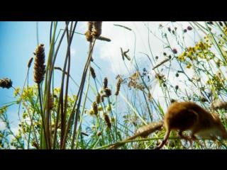 BBC: Планета Земля 2 - Пастбища (5 серия из 6) HD 720   Русская озвучка от Jimmy J.