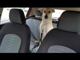 Айда в машине