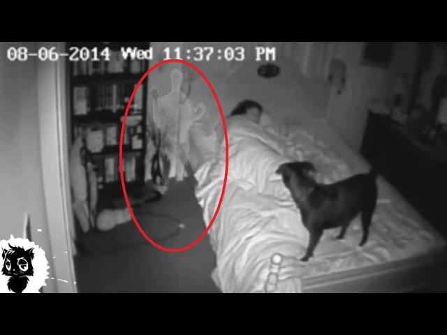 5 РЕАЛЬНЫХ СЛУЧАЕВ КОГДА ДОМОВОГО СНЯЛИ НА КАМЕРУ Черный кот
