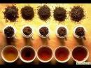 Ферментированный чай дегустация.