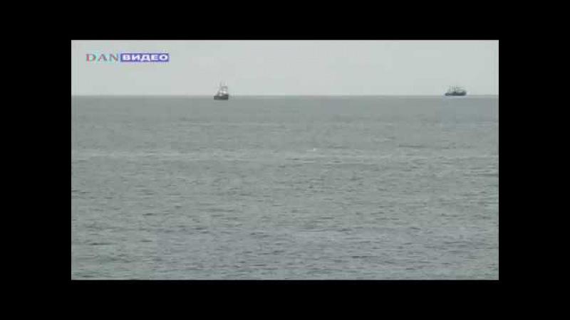 дельфины и нерпа в татарском проливе