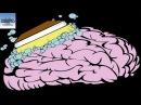 Cách Lọc Sạch Độc Tố Trong Não Thông Qua Giấc Ngủ - KAPA Channel