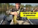 Ловля Щуки на поверхностные приманки Рыбалка в Краснодаре \\ Barrakuda show