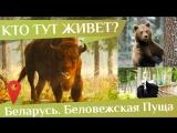 Тур в Беловежскую пущу отзывы