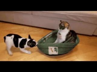 смешное видео про кота и собаку