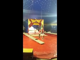 я под куполом цирка