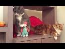 Смешные кошки приколы про кошек и котов 2017 8 Смешное видео - Funny Cats