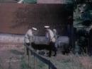 Казаки разбойники - Фрагмент (1979)