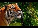 Интересные факты Джунгли Дикая природа и животные Южной Азии Лучший фильм о пр